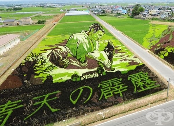 Фермери от японското село Inakadate създават оризови картини с различни видове ориз.