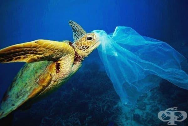 За костенурките пластмасовите торбички изглеждат като медузи, с които могат да се хранят, а последиците са смъртоносни.
