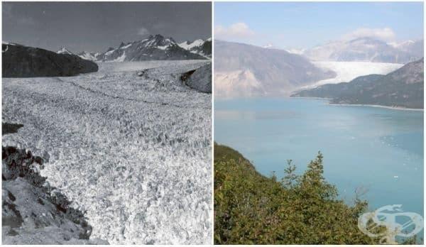 Ледник Муир, Аляска (август 1941 - август 2004).