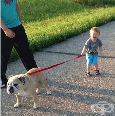 """""""Искаше той да разхожда кучето"""""""