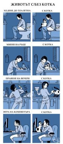 Смешни ситуации с котки