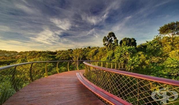 Въздушна пътека в Кейп Таун позволява на туристите да повървят над дърветата