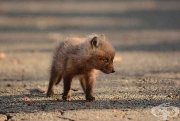 Баща и дъщеря намират бебета лисичета в задния двор