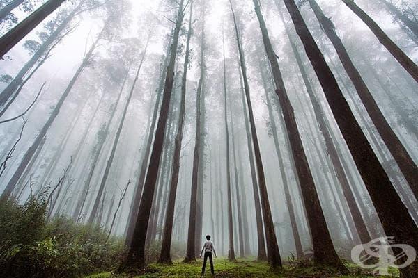 Малки хора, изгубени в магията на природата