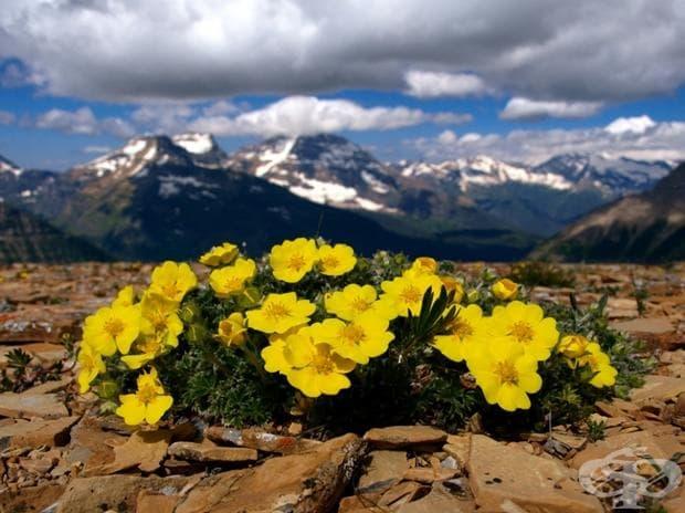 Glacier National Park, Монтана