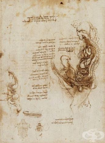Тази скица (отново на да Винчи) описва раждането и създаването на потомство. Тя е увековечила пасивната роля на жените от 16 век в сексуалния акт.