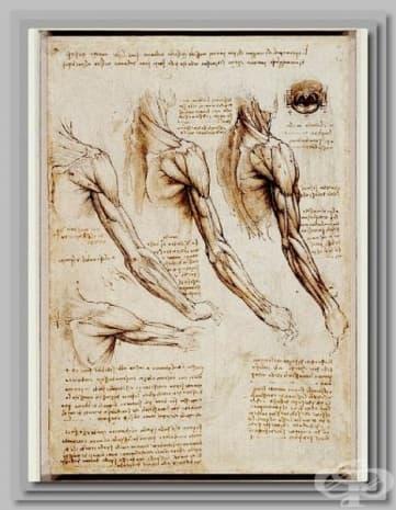 Рисунка, пресъздаваща анатомията на ръката. Творбата е на Леонардо да Винчи.