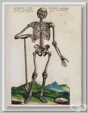 """""""Анатомия на скелета"""" - картина на Везалий."""