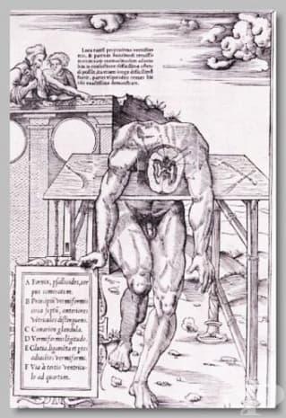 Картина на Шарл Етиен от 1546 година.