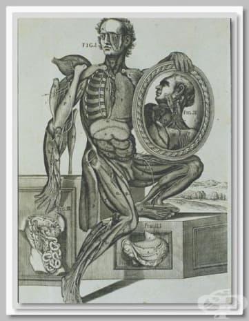 """Картината се казва """"Анатомия на мускулите"""" и е създадена от Пиерто да Кортона."""