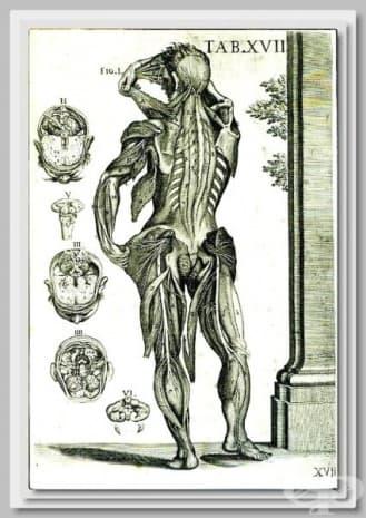 Картината е създадена през 1741 от Пиерто да Кортона.