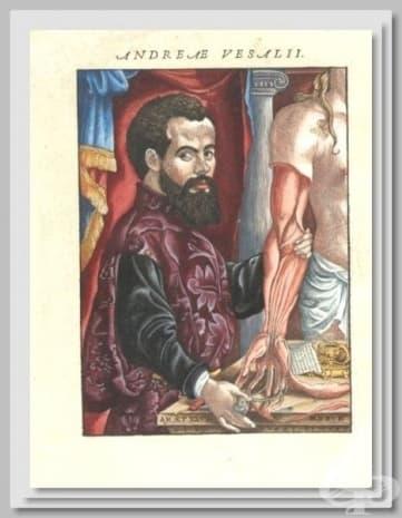 """Картина, публикувана в труда на Везалий """"De humani corporis fabrica libri septem""""."""