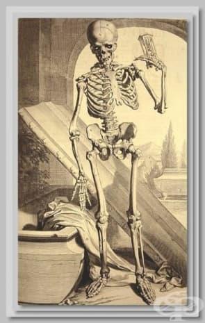 """""""Анатомия на човешкото тяло"""" - Говард Бидло от 1685 година."""