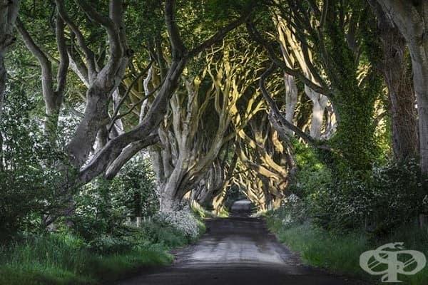 Дарк Хеджес, Северна Ирландия