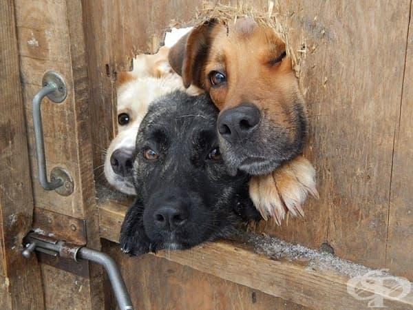 10 любопитни кучета, които искат да кажат здрасти