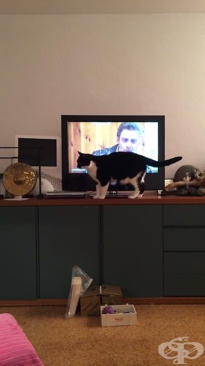 20 котки, снимани на грешното място в правилния момент