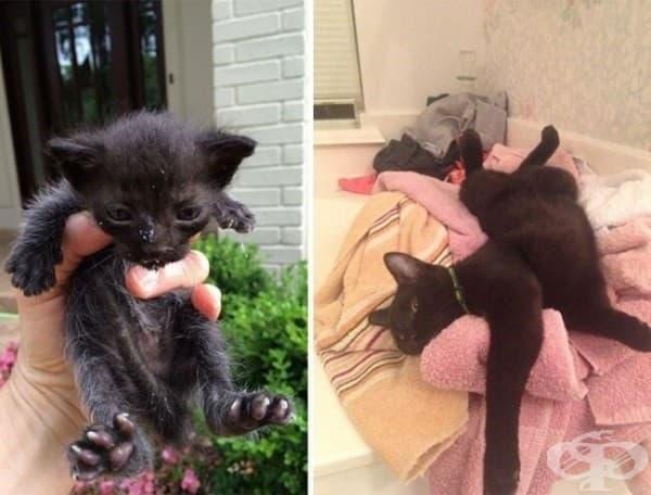 9 котки преди и след осиновяването