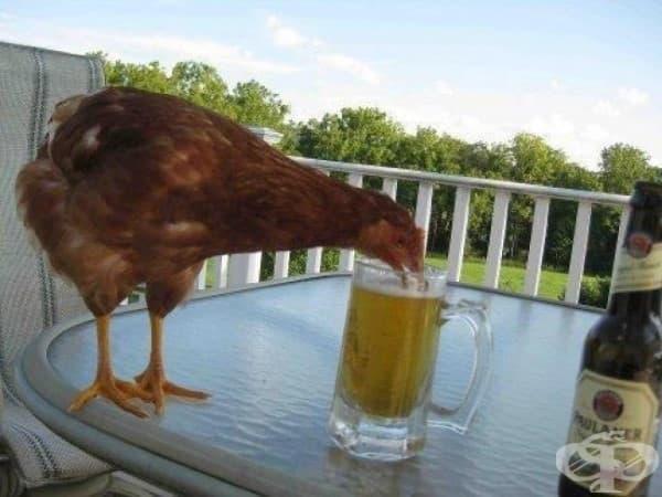 Ооо, благодаря! Това ми е любимата бира….
