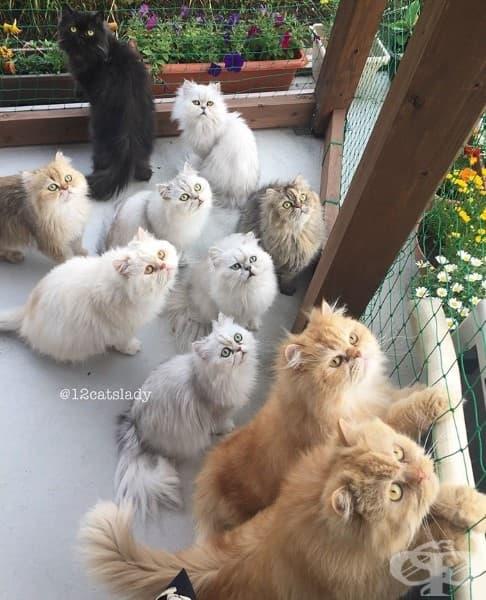 Запознайте със старата мома и нейните 12 котки
