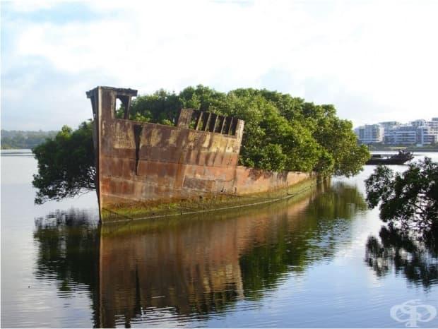100-годишен кораб, Австралия