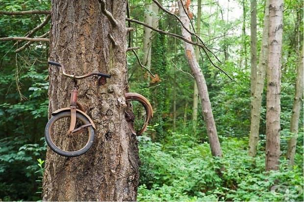 """Дърво""""изяло"""" колело"""