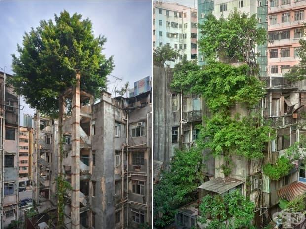 Дърветата побеждават бетона, Хонконг