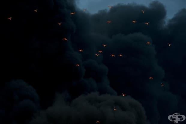 Птици, осветени в червено, от бушуващия под тях огън, търсят път през гъстия черен пушек.