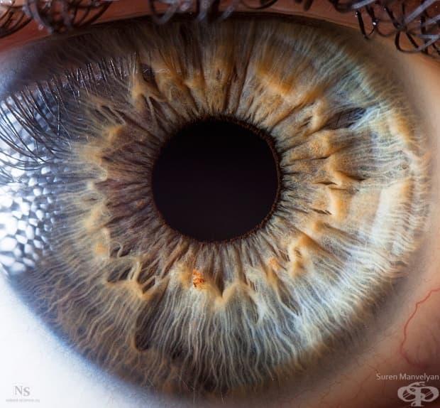 Много детайлна снимка на човешкото око и устройството на ириса.
