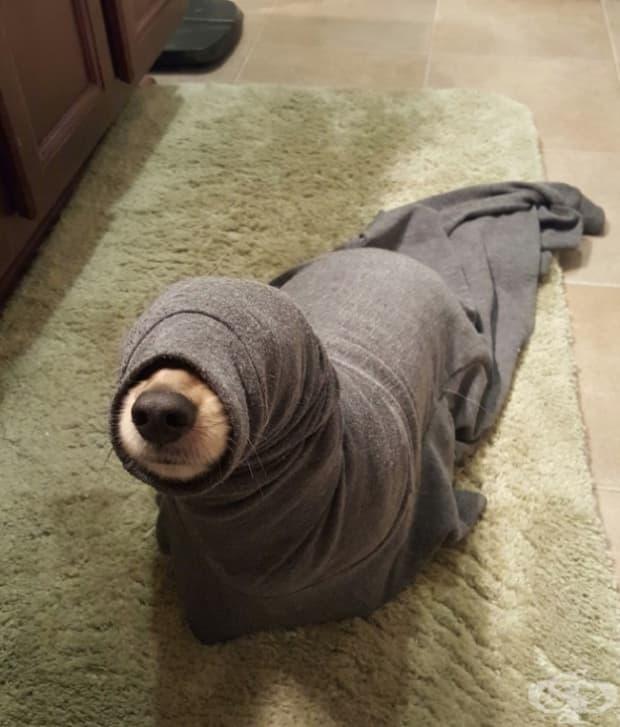 Току що открих тюлен вместо куче в апартамента си.