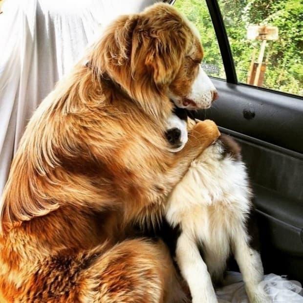 Те си мислят, че отиваме при ветеринаря, но всъщност сме се запътили към парка.