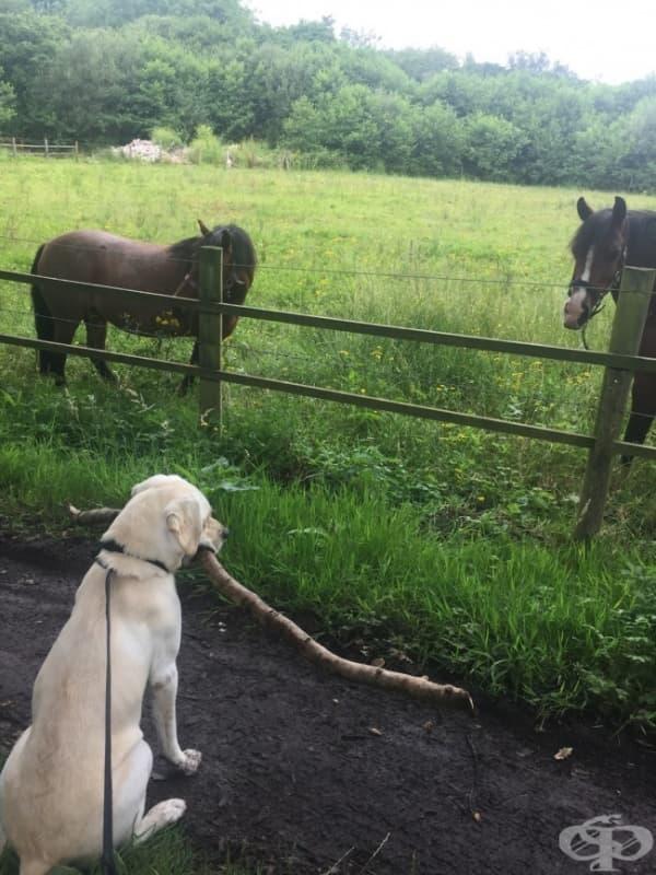 """Всеки ден, когато разхождам кучето си, то винаги намира възможно най-голямата пръчка и я поднася като подарък на """"големите кучета""""."""