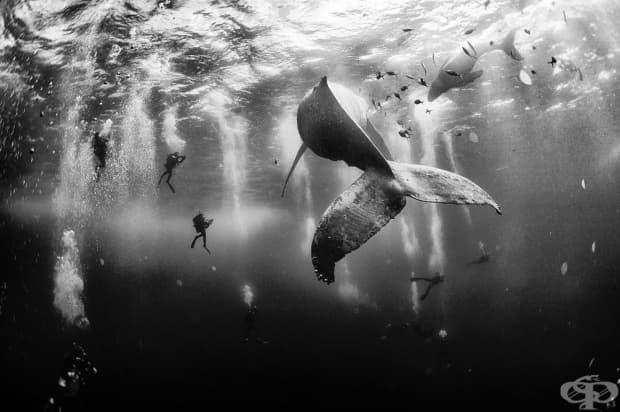 Подводния свят на остров Рок Партида, Мексико