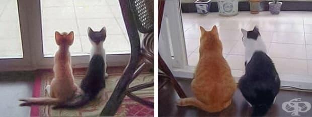 17 котки, които не са забелязали колко много са пораснали