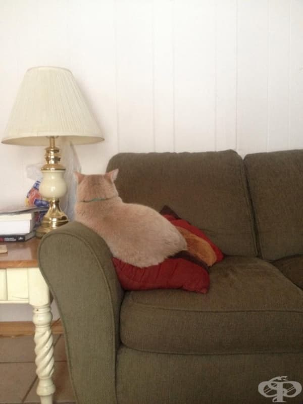 Разбира се, дори ако я обидите, тя няма да отиде по-далеч от дивана…