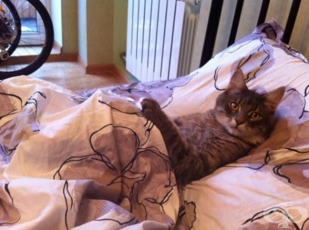 Не се учудвайте, ако котката ви реши, че иска да си размените леглата. Вие просто трябва да приемете новите правила.