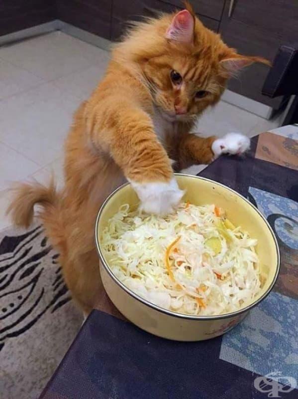 Разбира се, котките знаят как да се грижат за себе си.