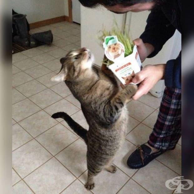 И никога не забравяйте да давате подаръци на котето си, когато има повод.