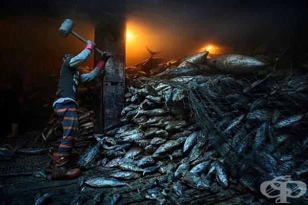 Работник използва чук, за да разбие замразена риба тон на борда на китайски кораб в град Генерал Сантос във Филипините.