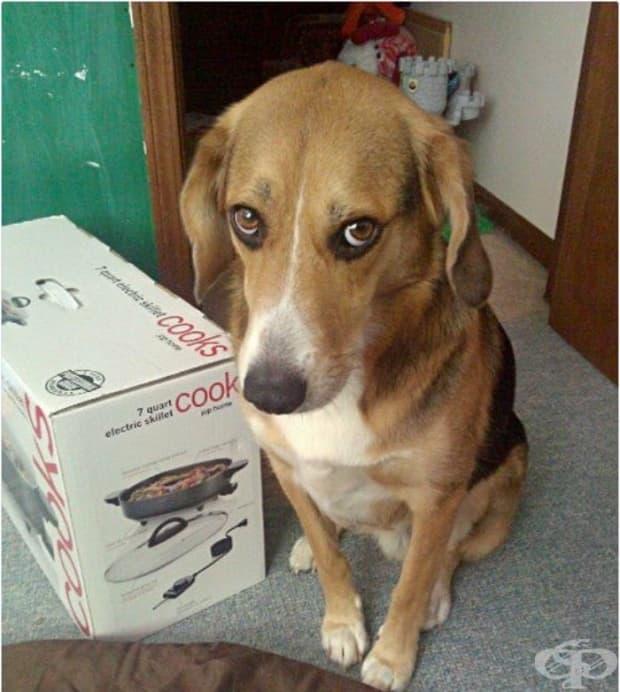 Когато се прибрах от работа, всичко изглеждаше наред, но кучето ме гледаше с онзи поглед…