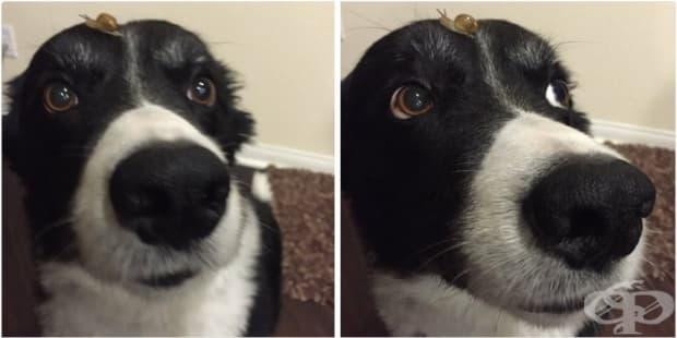 Оставих кучето си навън за 30 минути и ето какво се случи