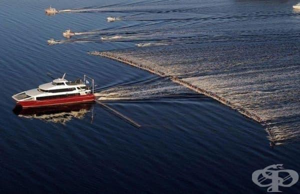 Водни скиори поставят нов световен рекорд, след като 145 човека са били теглени само от една лодка, Тасмания.