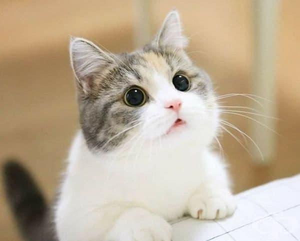 """Това котката от филма """"Шрек"""" ли е?"""