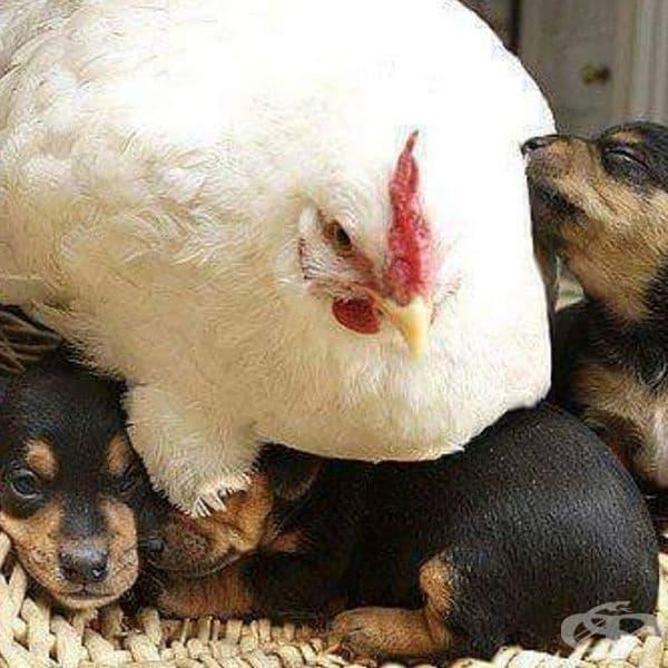 Обичта на майката няма граници.