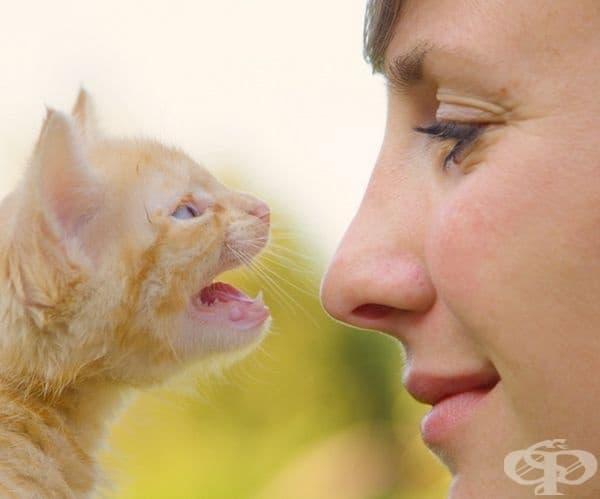 В зряла възраст котките мяукат , за да общуват със стопаните си, но не и помежду си. Те комуникират чрез движения, миризми и други звуци.