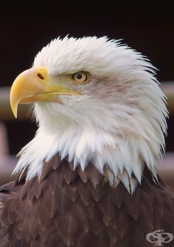 Птиците също могат да бъдат перфектни в позирането.