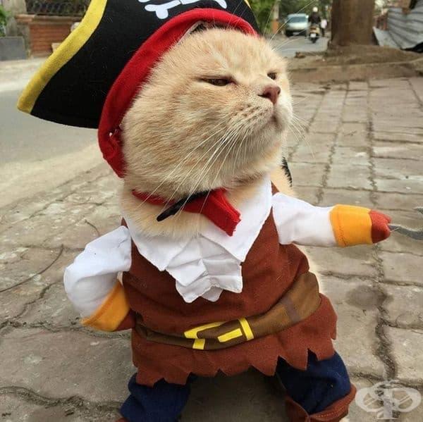 В ролята на капитан Кук.