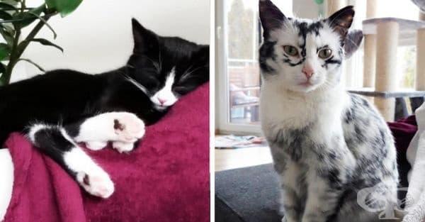 Жена приютява две черно-бели котки в дома си. След два месеца едната побелява