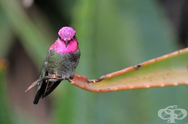Колибритата не могат да ходят.