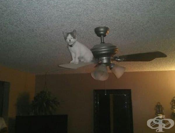 Ето къде е котката!