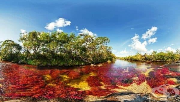 5-цветна река Каньо Кристалес, Колумбия.